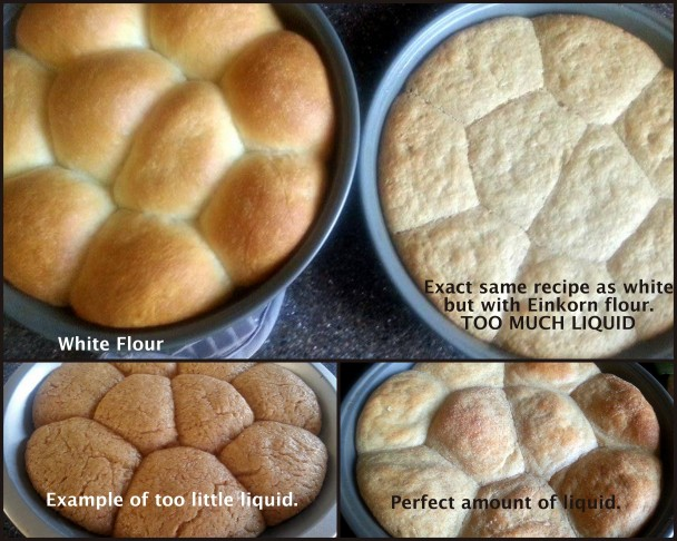 Tips For Baking With Einkorn Flour » Einkorn.com